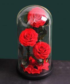 rose eternelle sous cloche 3 fleurs