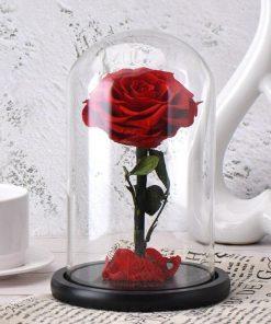 Rose Éternelle Belle Et La Bête Rouge